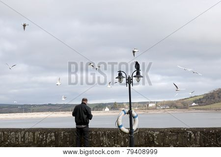 Big Crow Perched On Top Of Lamp