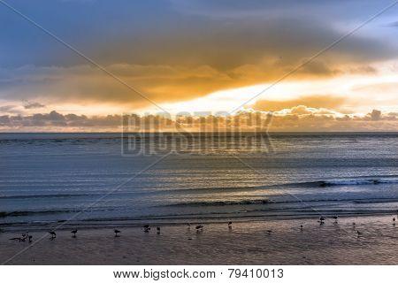 Birds On The Sunset Beach In Beal