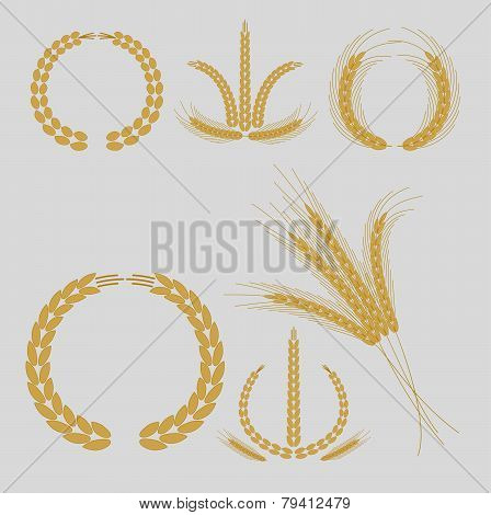 cereal grains and ears