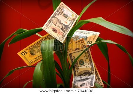 Money Flower