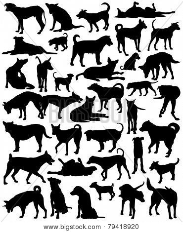 Collection of editable vector silhouettes of a motley group of Bangkok street dogs