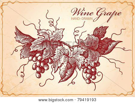 Wine Grapes Vintage Style Illustration