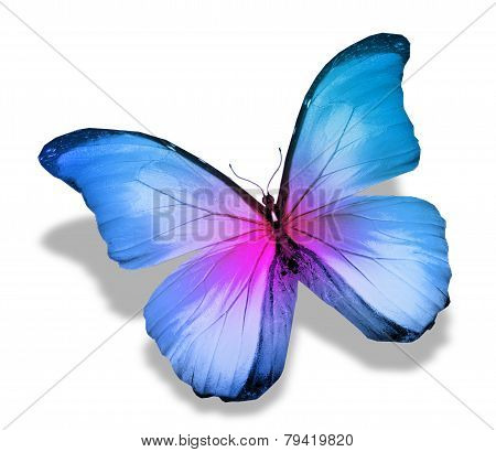 Morpho Blue Pink Butterfly , Isolated On White
