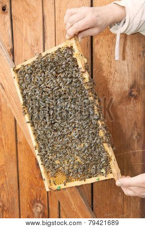 Honeycomb Of A Beehive