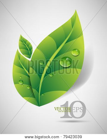 eps10 vector green leaves with dew drops and shadow elegant business background