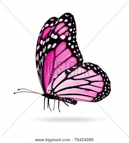 Pink Butterfly , Isolated On White Mirror Background