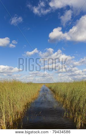 Waterway through the Florida Everglades or tropical wetlands with blue sky and white clouds