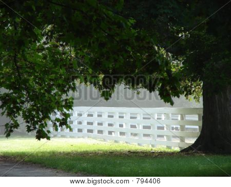 White Wood Fence and Tree