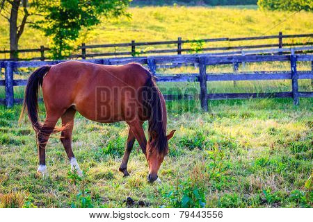 Beautiful chestnut mare on a farm in Central Kentucky