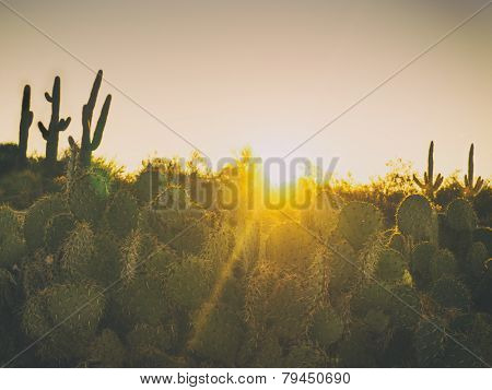 Beautiful desert morning sunrise