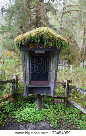 phone boot in olympic national park