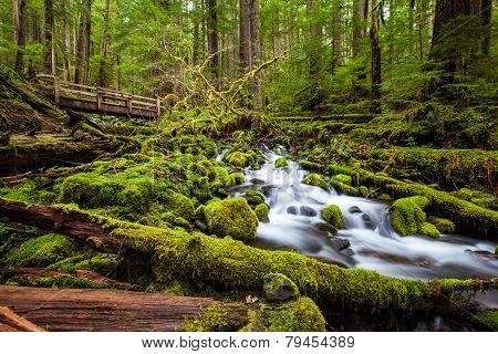 Beautiful Cascade Waterfall In Sol Duc Falls Trail