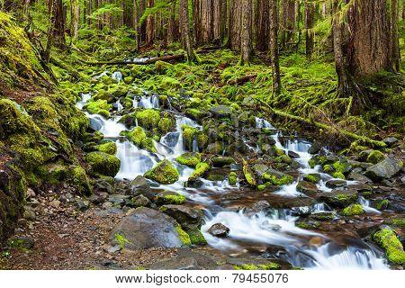 Cascade Waterfall In Rain Forest