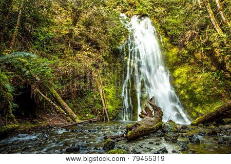 Waterfall In Rain Forest, Olympic National Park