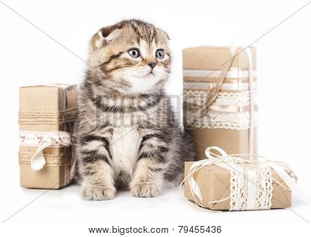 kitten in a present box isolated on white background