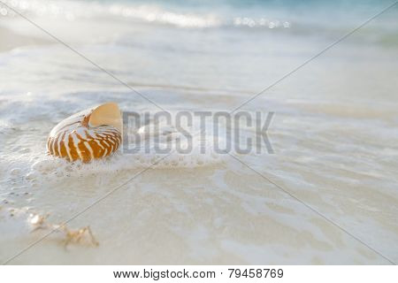 nautilus shell sea waves, live action ... , shallow dof