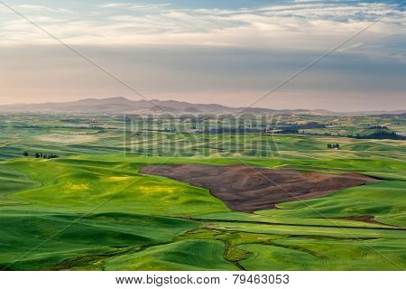 Agriculture  Field In Palouse