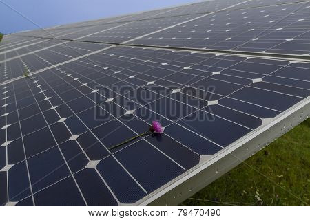 Solar Panel With Rainy Drops On It; Flower; Illuminated By Sunlight