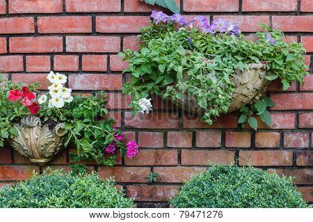 flowers In Pots