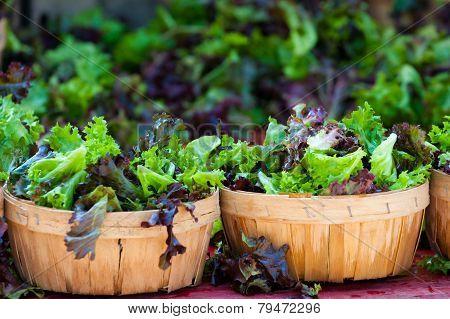 baskets of fresh salad in farmer market