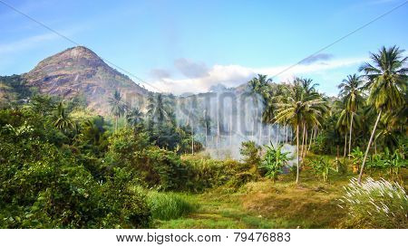 Forest And Mountain View