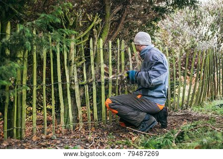 Gardener Pruning Tree