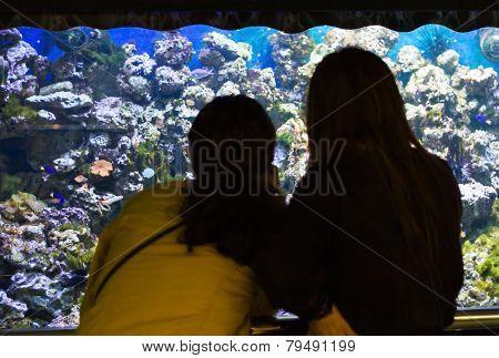 Women Looking At A Aquarium