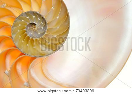 nautilus shell isolated on white background