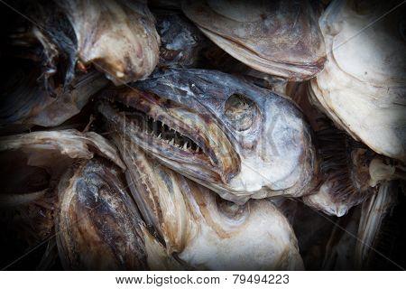 frightening fish heads  of cod