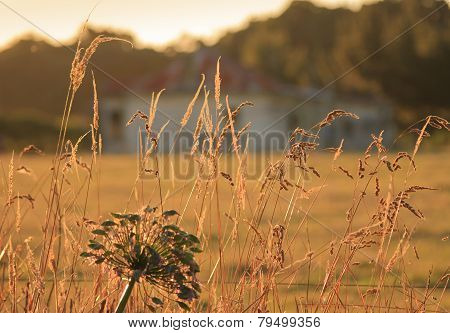 Golden Sunset In The Fields