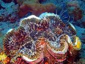 image of enormous  - The surprising underwater world of the Bali basin - JPG
