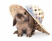 picture of dwarf  - Dwarf rabbit in a straw hat - JPG
