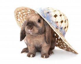 picture of dwarf rabbit  - Dwarf rabbit in a straw hat - JPG
