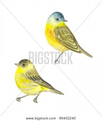 Watercolor birds Western Yellow Wagtail (Motacilla flava) and Siskin (Carduelis spinus), vector illustration.