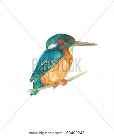 Watercolor Kingfisher bird (Alcedo atthis), vector illustration.