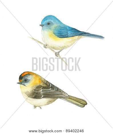 Watercolor birds Red-flanked bluetail (Tarsiger cyanurus) and Common Firecrest (Regulus ignicapilla), vector illustration.