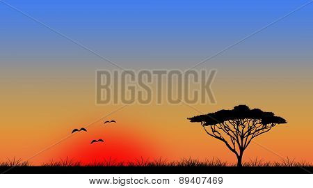 Widescreen sunset tree landscape