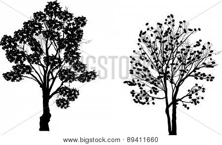 illustration with two trees isolated on white background