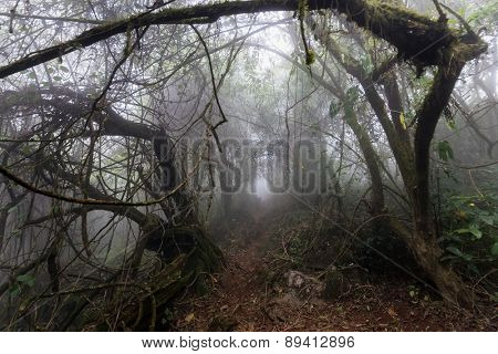 Gloomy natural tunnel in a foggy tropical forest in early morning