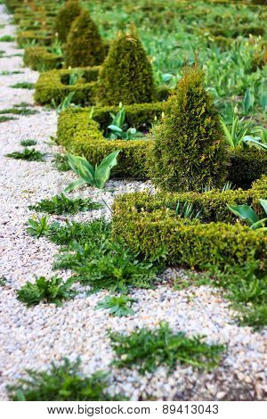 Landscaping With Cypresses
