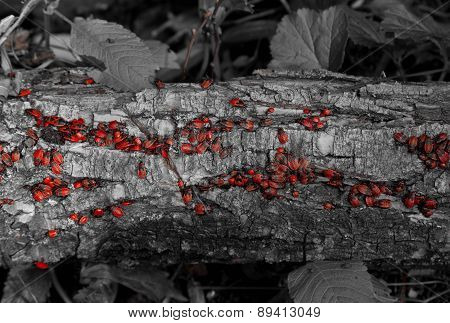 hundreds of red insects on a tree