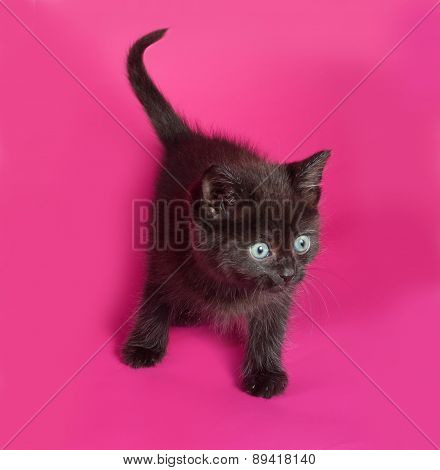 Black Fluffy Kitten Standing On Pink