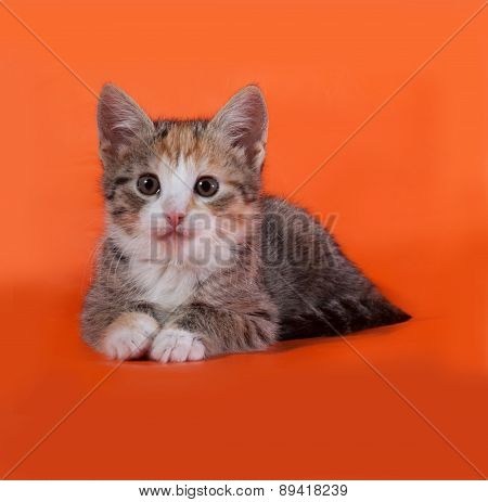 Tricolor Striped Kitten Lies On Orange