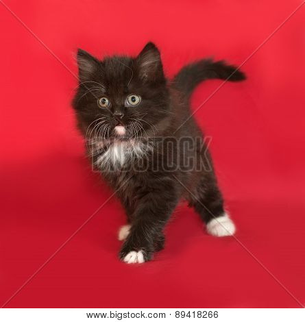 Black And White Fluffy Kitten Standing On Red