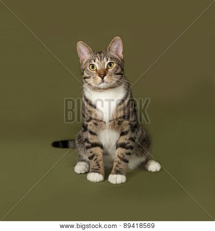 Tabby And White Cat Sitting On Green