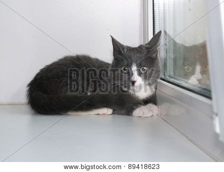 Grey And White Kitten Lying On Window Sill