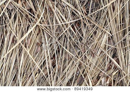 Photos Dry Grass