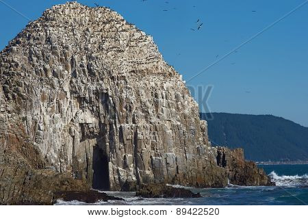 Seabird Colonies on the Coast of Chile