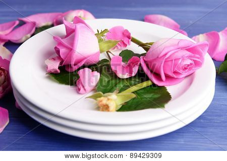 Beautiful pink roses in white plates on wooden table, closeup