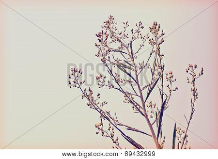 Wayside grass (Purple nut grass) retro style